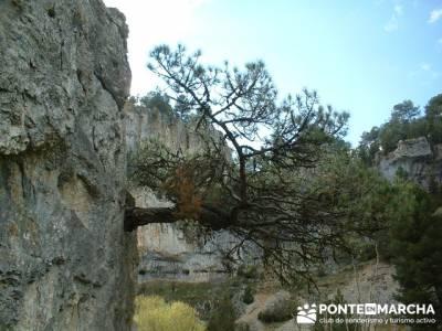 Cañón de Río Lobos - trekking; lugares con encanto; alto tajo